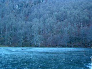 Lac-gele[1]
