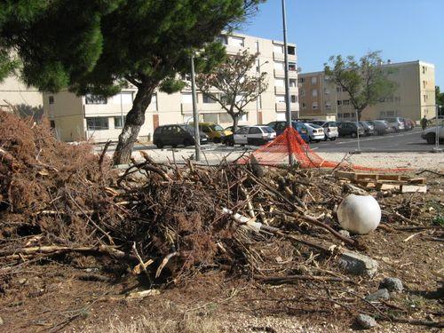 Germinal arbres abattus