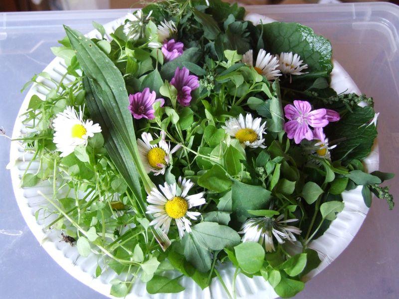 Cuisinez les plantes sauvages la garde freinet le coin bleu - Cuisine plantes sauvages ...