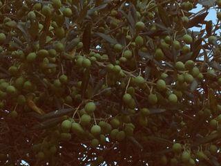 Le coin bleu olivier