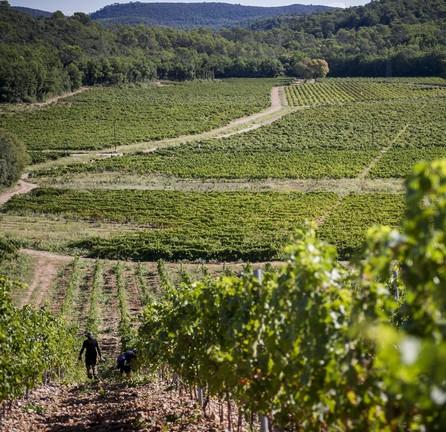 Le-travail-de-la-vigne-a-la-Commanderie-de-Peyrassol